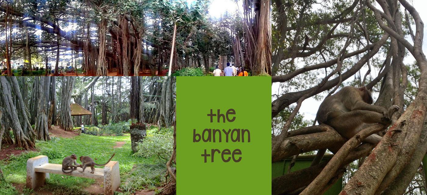 Jayanagar_banyan_tree